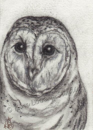 Art: Charcoal Barn Owl by Artist Kim Loberg