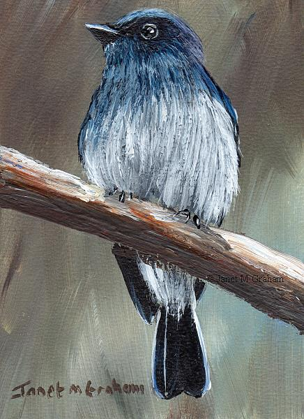 Art: Indigo Flycatcher ACEO by Artist Janet M Graham