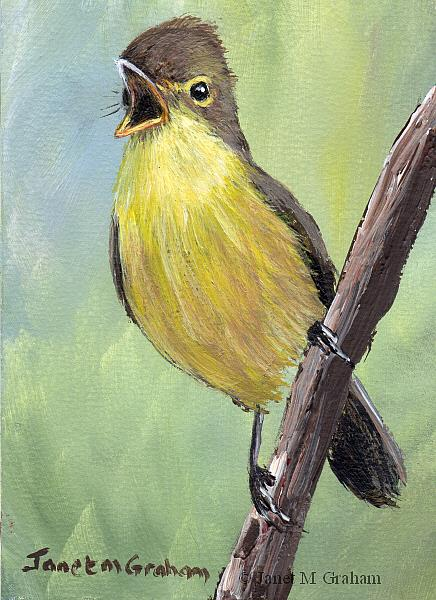 Art: Melodious Warbler ACEO by Artist Janet M Graham