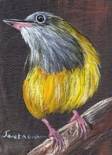 Art: Connecticut Warbler ACEO by Artist Janet M Graham