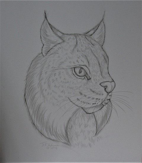 Art: Chain Lynx by Artist Jackie K. Hixon