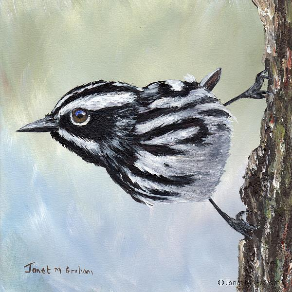 Art: Black and White Warbler by Artist Janet M Graham