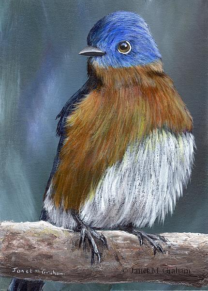 Art: Eastern Bluebird No 3 by Artist Janet M Graham