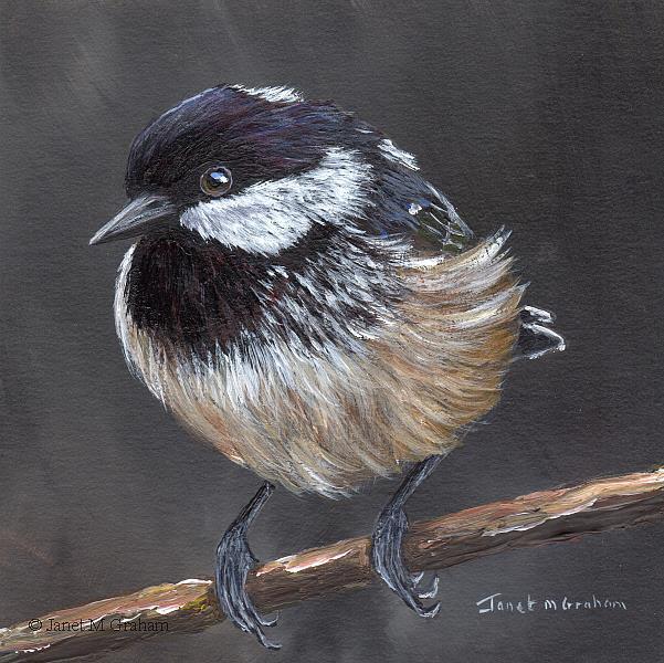 Art: Coal Tit No 4 by Artist Janet M Graham