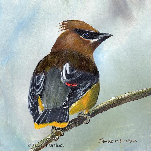 Art: Cedar Waxwing by Artist Janet M Graham