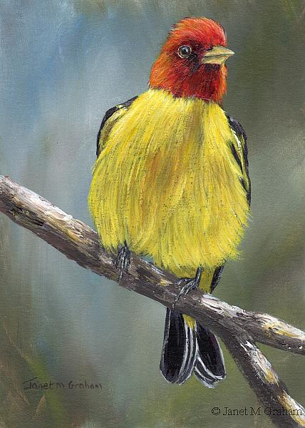 Art: Western Tanager by Artist Janet M Graham