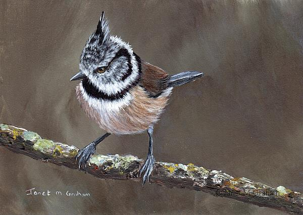 Art: Crested Tit by Artist Janet M Graham