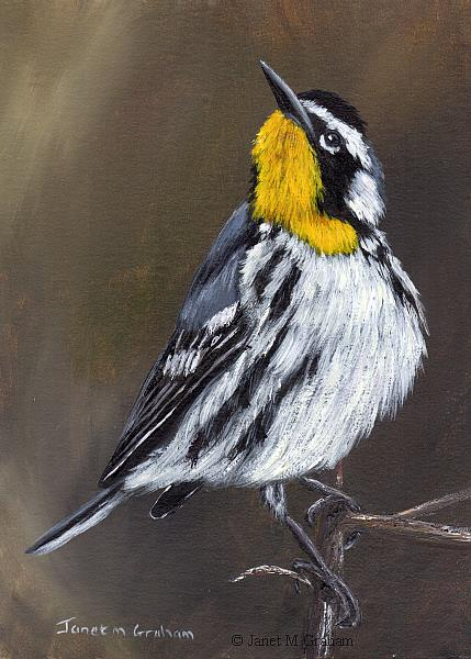 Art: Yellow Throated Warbler No 2 by Artist Janet M Graham