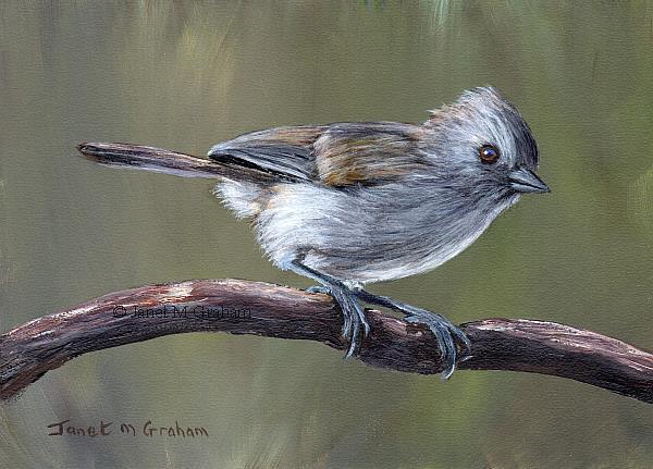 Art: Oak Titmouse no 3 by Artist Janet M Graham