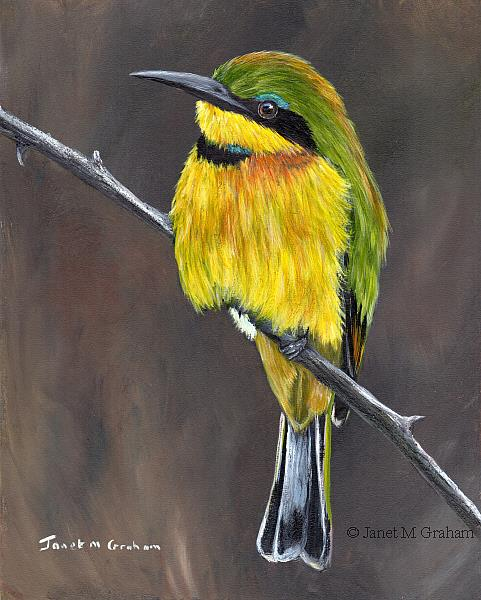 Art: Little Bee Eater No 2 by Artist Janet M Graham