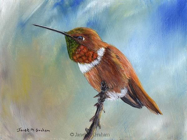 Art: Allen's Hummingbird by Artist Janet M Graham