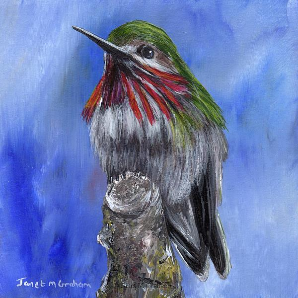 Art: Calliope Hummingbird No 2 by Artist Janet M Graham