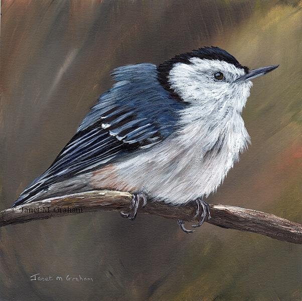 Art: White Breasted Nuthatch No 3 by Artist Janet M Graham
