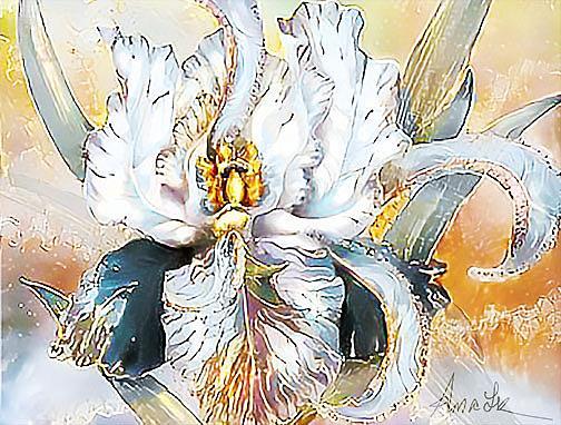 Art: white iris lr by Artist Alma Lee