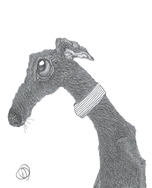 Art: GREYHOUND g313 by Artist Dawn Barker