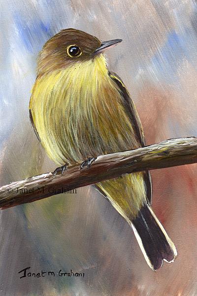 Art: Yellow Bellied Flycatcher by Artist Janet M Graham
