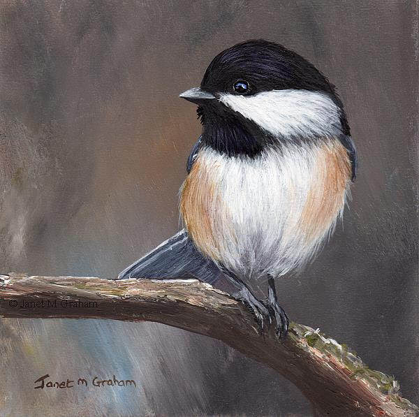 Art: Black Capped Chickadee No 9 by Artist Janet M Graham