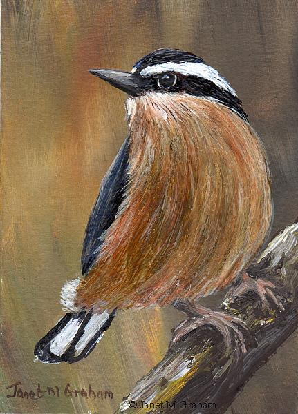 Art: Red Breasted Nuthatch No 2 by Artist Janet M Graham
