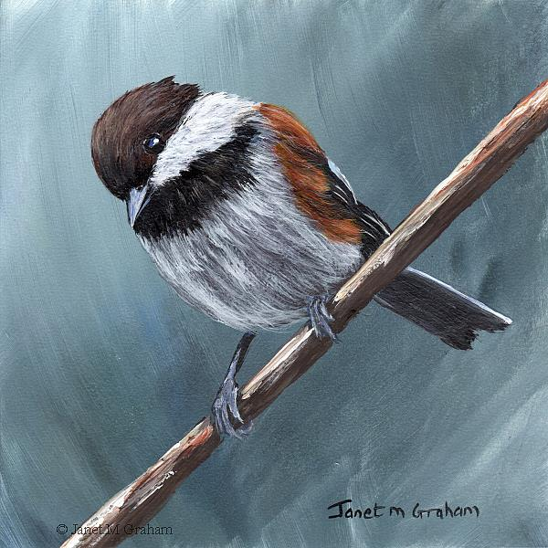 Art: Chestnut Backed Chickadee No 4 by Artist Janet M Graham