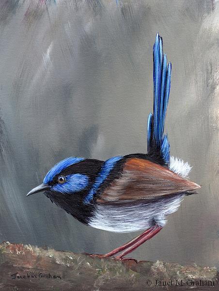 Art: Superb Fairy Wren No 15 by Artist Janet M Graham