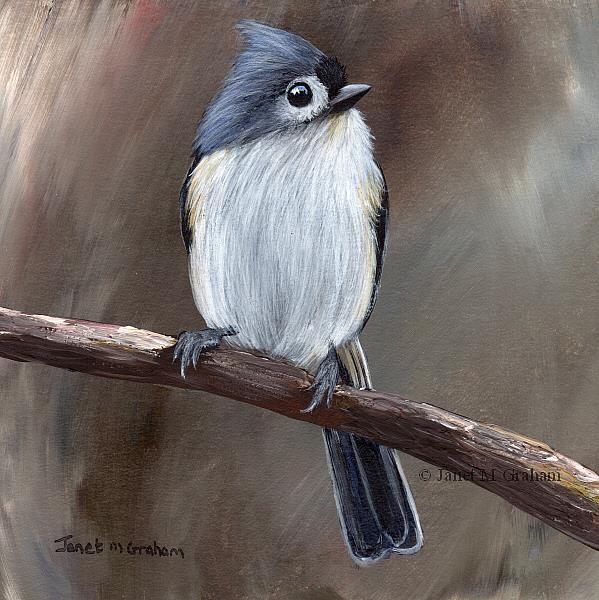 Art: Tufted Titmouse No 14 by Artist Janet M Graham