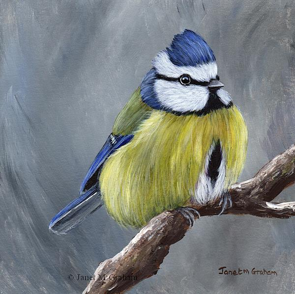 Art: Blue Tit No 8 by Artist Janet M Graham