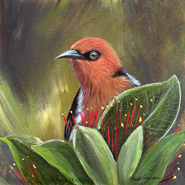 Art: Scarlet Honeyeater by Artist Janet M Graham