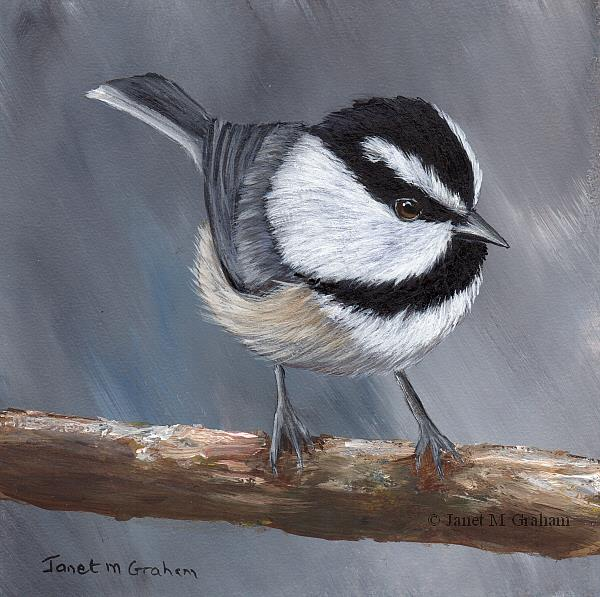 Art: Mountain Chickadee No 4 by Artist Janet M Graham