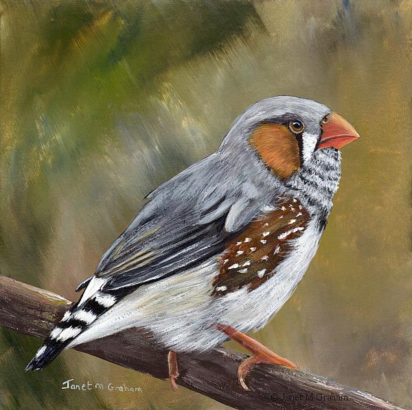 Art: Zebra Finch No 2 by Artist Janet M Graham