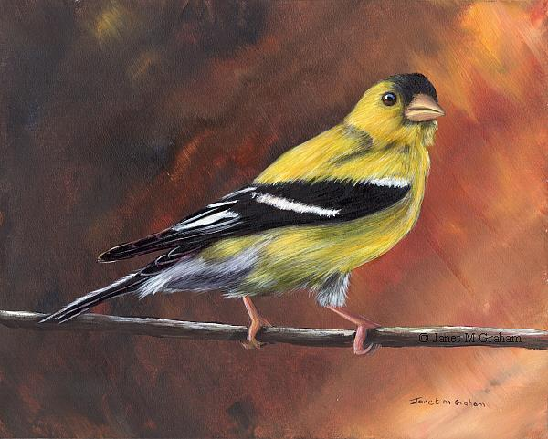 Art: American Goldfinch No 4 by Artist Janet M Graham