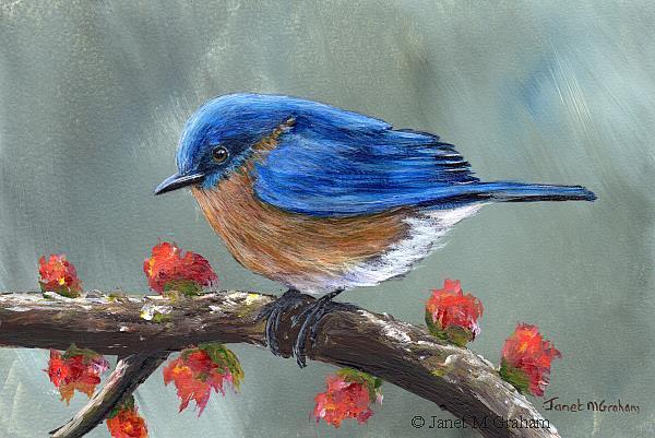 Art: Spring Bluebird by Artist Janet M Graham