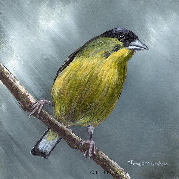 Art: Lesser Goldfinch No 2 by Artist Janet M Graham