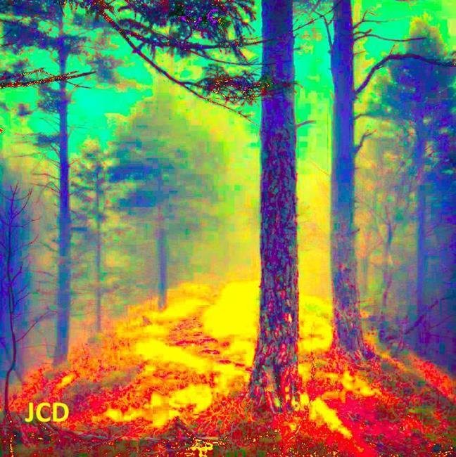 Art: MY FOREST by Artist Jean-Claude Delhaise