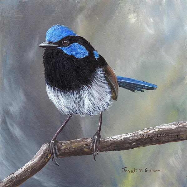Art: Superb Fairy Wren No 16 by Artist Janet M Graham
