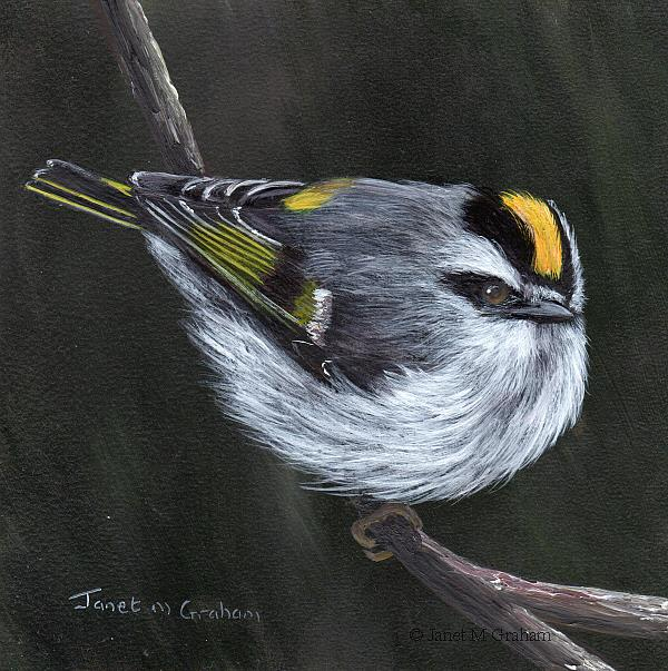 Art: Golden Crowned Kinglet No 4 by Artist Janet M Graham