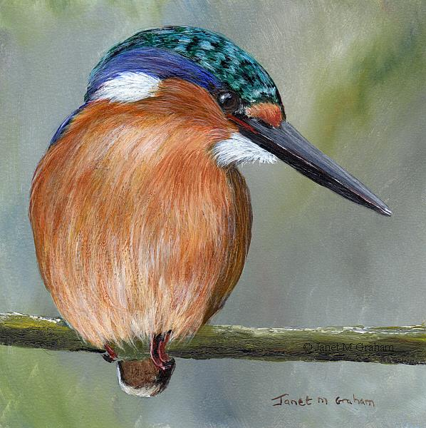 Art: Malachite Kingfisher No 5 by Artist Janet M Graham