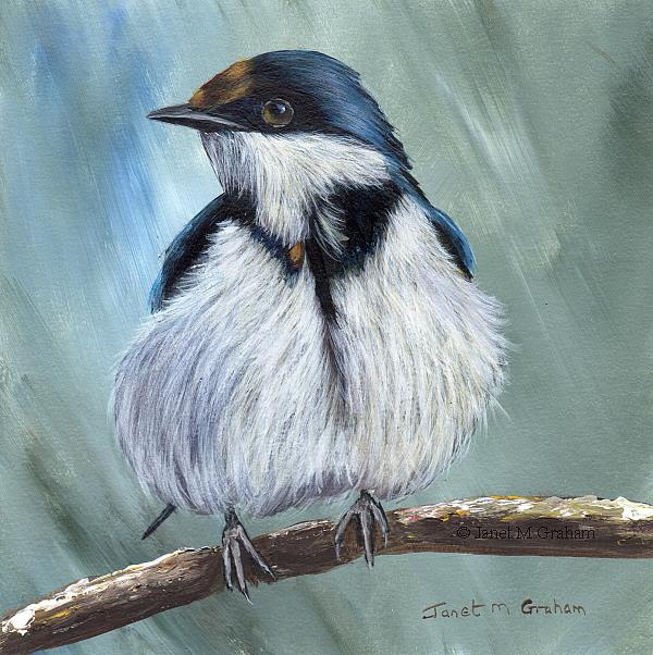 Art: White Throated Swallow by Artist Janet M Graham