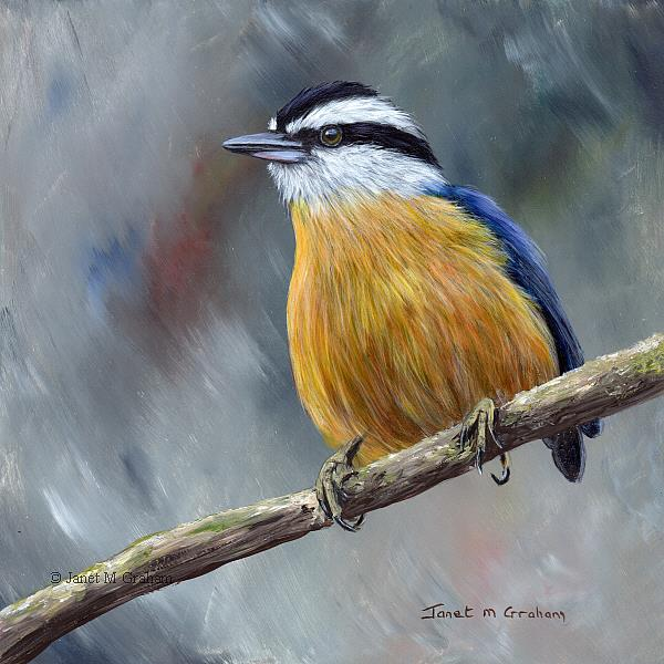 Art: Red Breasted Nuthatch No 7 by Artist Janet M Graham