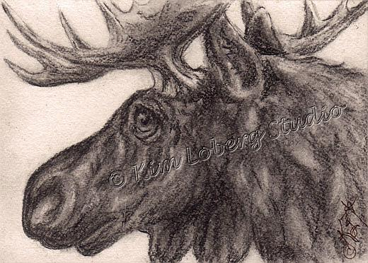 Art: Charcoal Bull Moose by Artist Kim Loberg