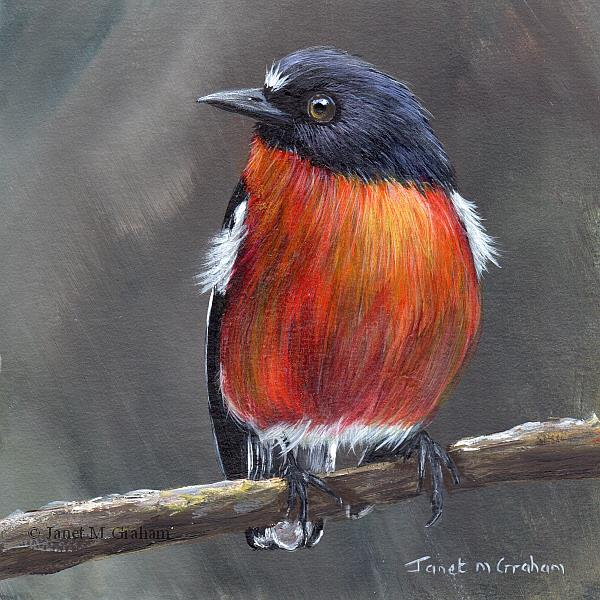 Art: Flame Robin No 4 by Artist Janet M Graham