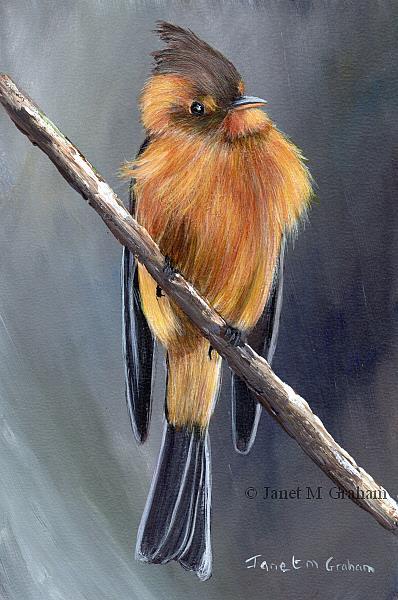 Art: Tufted Flycatcher by Artist Janet M Graham