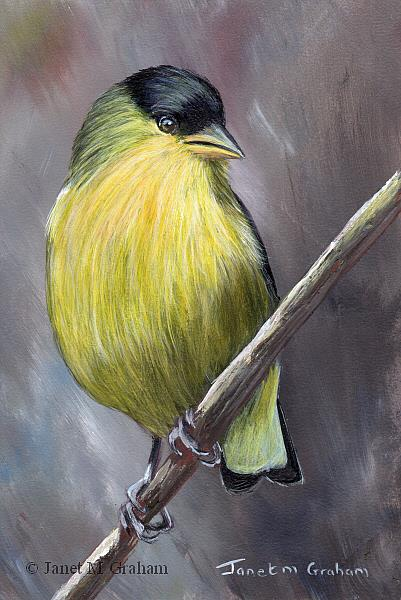 Art: Lesser Goldfinch No 3 by Artist Janet M Graham