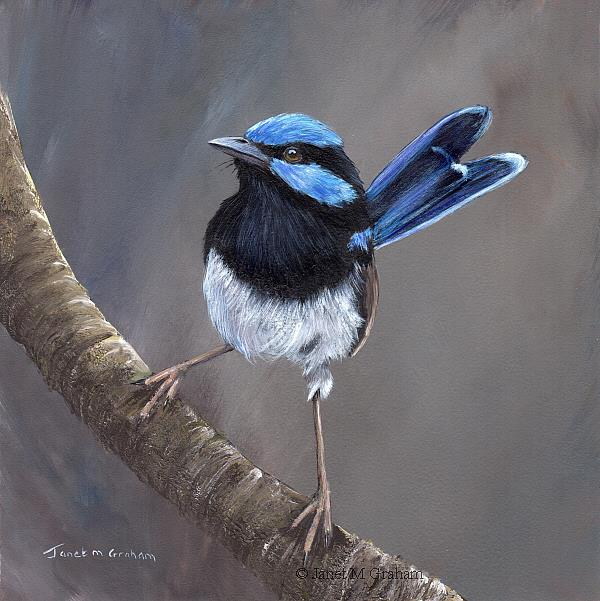 Art: Superb Fairy Wren No 18 by Artist Janet M Graham