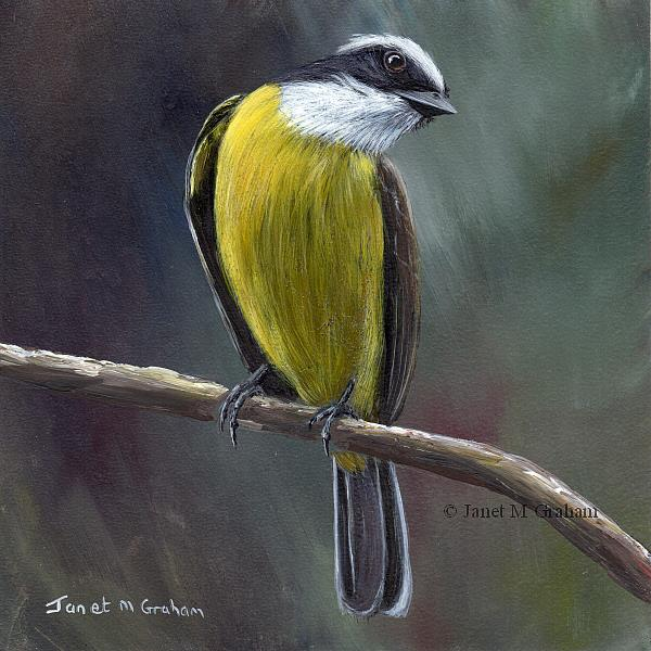 Art: Social Flycatcher by Artist Janet M Graham