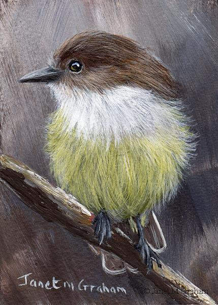 Art: Galapagos Flycatcher ACEO by Artist Janet M Graham