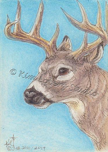 Art: Pen & Ink Whitetail by Artist Kim Loberg