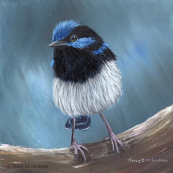 Art: Superb Fairy Wren No 19 by Artist Janet M Graham
