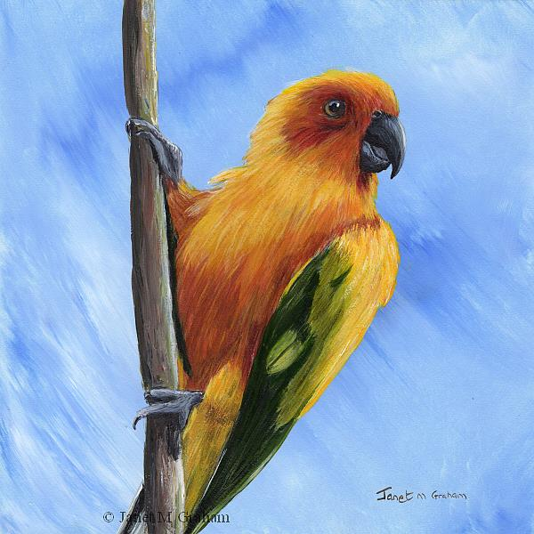Art: Sun Parakeet by Artist Janet M Graham