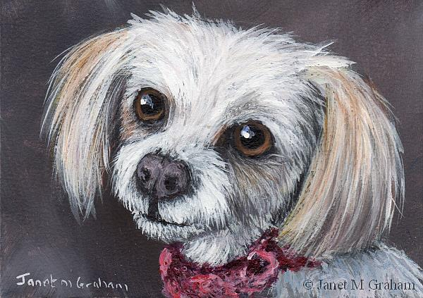 Art: Bella ACEO by Artist Janet M Graham