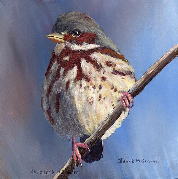 Art: Fox Sparrow by Artist Janet M Graham